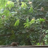 Sparrows & squirrels: peaceful coexistence