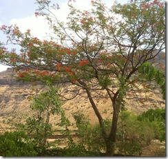My Igatpuri room view